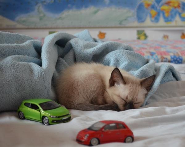 прививки на дому для кошек и собак